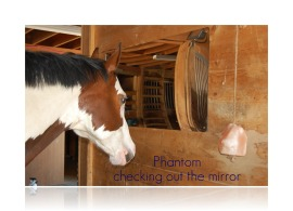 phantom checking out the mirror