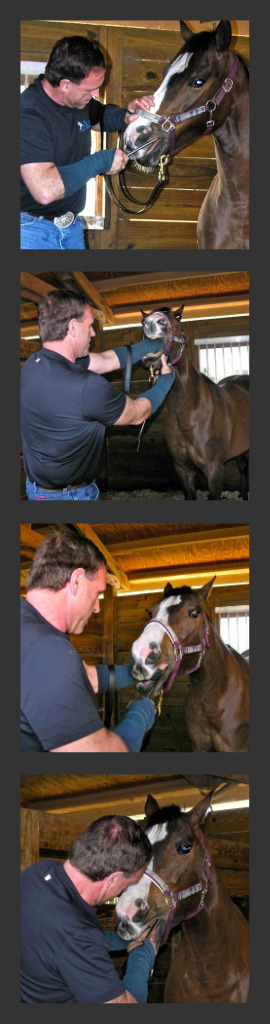 Geoff working on a horse