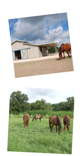 lope - ranch collage