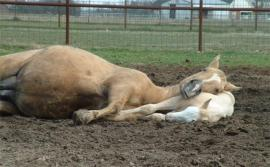 Number#1reason for having a foal  :)