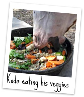 lavsage - Koda-eating-veggies