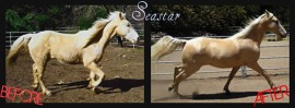 LAVSAGE - seastar before and after