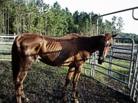 rescue horse 2