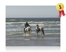 Summer Fun - Robin Shen Beach