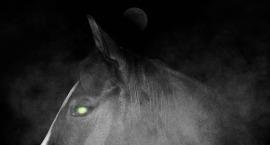 headless horseman - spooky horse