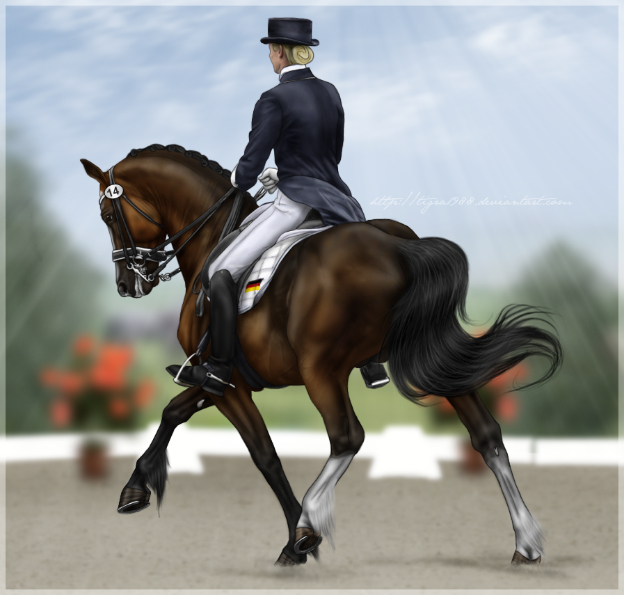 Any Horse Can do Dressage