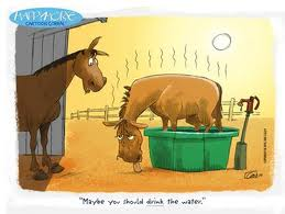 Water and hot horse