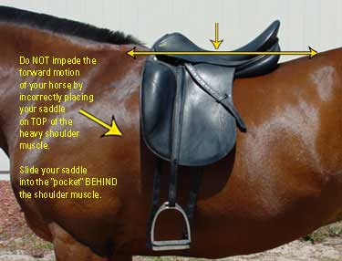 how to choose the right dressage saddle