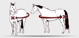 horse sizing